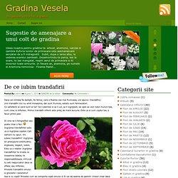 Trandafirul | Gradina Vesela