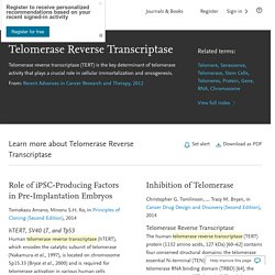 Telomerase Reverse Transcriptase - an overview