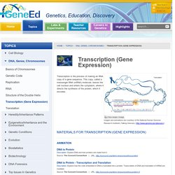 Transcription (Gene Expression) - GeneEd - Genetics, Education, Discovery