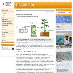 Transformation mit Agrobakterien - Basisinfo - biosicherheit.de