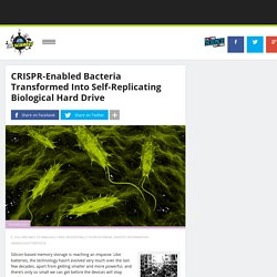 CRISPR-Enabled Bacteria Transformed Into Self-Replicating Biological Hard Drive