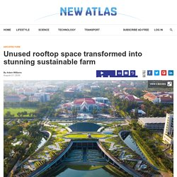 Unused rooftop space transformed into stunning sustainable farm