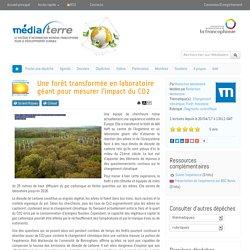 Une forêt transformée en laboratoire géant pour mesurer l'impact du CO2