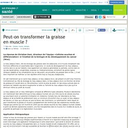 Peut-on transformer la graisse en muscle ?