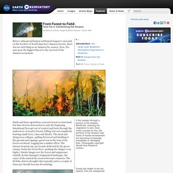 From Forest to Field: How Fire is Transforming the Amazon : Feature Articles