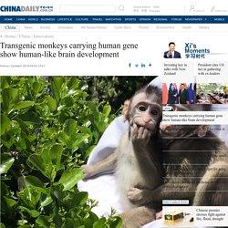 CHINA DAILY 02/04/19 Transgenic monkeys carrying human gene show human-like brain development