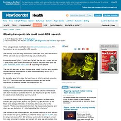 Glowing transgenic cats could boost AIDS research - health - 11 September 2011