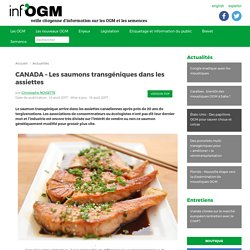 CANADA – Les saumons transgéniques dans les assiettes - Inf'OGM - Veille citoyenne sur les OGM