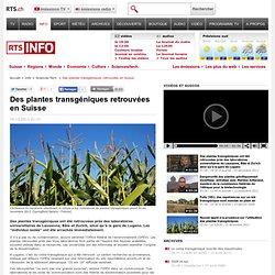 Des plantes transgéniques retrouvées en Suisse - tsr.ch - info - sciences-tech.