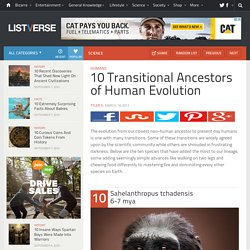10 Transitional Ancestors of Human Evolution
