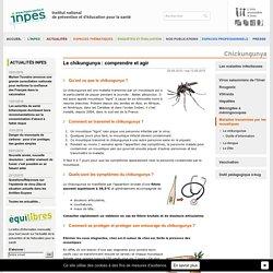 Maladies transmises par les moustiques - Chikungunya