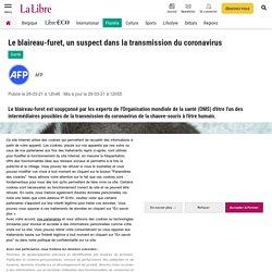 AFP 29/03/21 Le blaireau-furet, un suspect dans la transmission du coronavirus