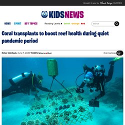 Divers transplant coral to boost health of Great Barrier Reef after bleaching and climate change damage