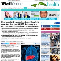 New hope for transplant patients: Scientists GROW tiny liver in a lab that could one day patch up diseased and damaged organs