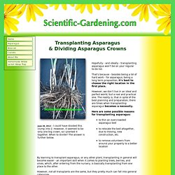 Transplanting Asparagus and Dividing Asparagus Crowns