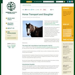 HUMANE SOCIETY INTERNATIONAL 04/12/12 Horse Transport and Slaughter