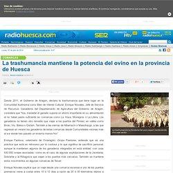 La trashumancia mantiene la potencia del ovino en la provincia de Huesca