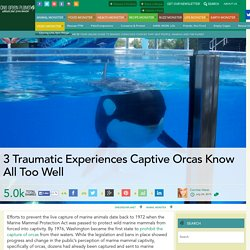 3 Traumatic Experiences Captive Orcas Know All Too Well