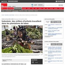 Indonésie: des milliers d'enfants travaillent dans les plantations de tabac