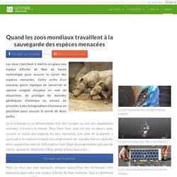Quand les zoos mondiaux travaillent à la sauvegarde des espèces menacées
