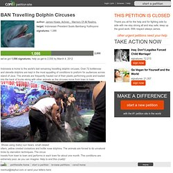 BAN Travelling Dolphin Circuses