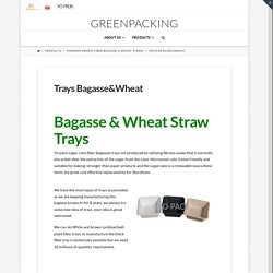 Trays Bagasse&Wheat - Greenpacking
