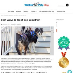 Best Ways to Treat Dog Joint Pain and Provide Joint Support