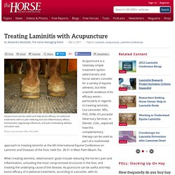 Treating Laminitis with Acupuncture