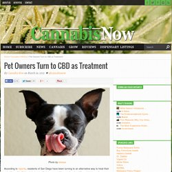 Pet Owners Turn to CBD as Treatment