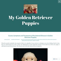 Causes, Symptoms and Treatments of Periodontal Disease in Golden Retriever Puppies – My Golden Retriever Puppies