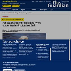 Pet flea treatments poisoning rivers across England, scientists find