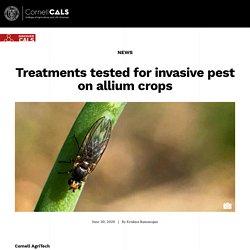 CORNELL_EDU 30/06/20 Treatments tested for invasive pest on allium crops (Phytomyza gymnostoma)