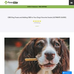 CBD Dog Treats and Adding CBD to Your Dog's Favorite Snacks [GUIDE]