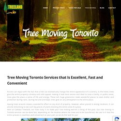 Tree Moving in Toronto
