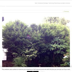 Tree Pruning: 3 factors that you must keep in mind while