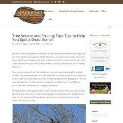 Tree Service and Pruning Tips: Tips to Help You Spot a Dead Branch