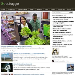 Green Jobs | TreeHugger