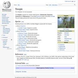 Treepie