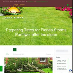 What to do With Trees in Florida due to Florida's High Windstorms Part two: what to do after the storm
