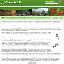 Trees for Life - Mythology and Folklore of the Hazel