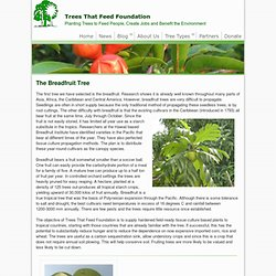 Trees That Feed Foundation