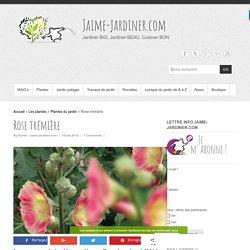 ROSE TREMIÈRE, Semer, planter, entretenir avec jaime-jardiner.com