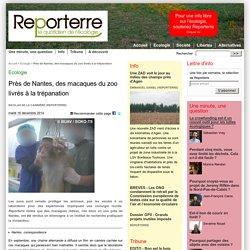 Près de Nantes, des macaques du zoo livrés à la trépanation