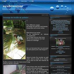 Tressage de feuille de palmier . . . - Le blog de ayubowanne