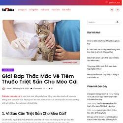 Triệt Sản Cho Mèo Cái Và Những Thắc Mắc Cần Giải Đáp