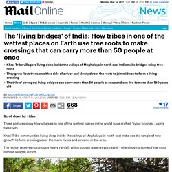 Item 16 - How tribes in India use tree roots to make 'living bridges'