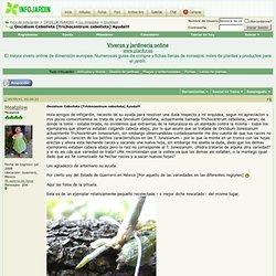 Oncidium Cebolleta [Trichocentrum cebolleta] Ayuda!!!
