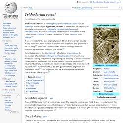Trichoderma reesei - Wikipedia