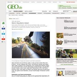 Tipps und Tricks - Wenn Haustiere reisen - Reisewissen- GEO.de
