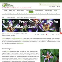 Tricyrtis - Perennial Toad Lilies for the Woodland Garden